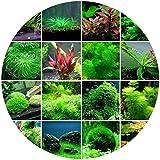 Pyouhe 300Pcs Semences de l'eau aquatique Aquarium Plantation des graines Fish Tank Deaoration Grass Graines Graines