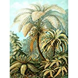 Wee Blue Coo LTD 92nd Plate Ernst Haeckel Kunstformen der Natur Filicinae Canvas Print