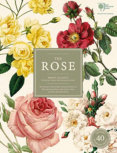 the-rose-the-history-of-the-worlds-favourite-flower-in-40-captivating-roses-with-classic-texts-and-b