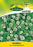 Gründünger - Weißklee von Quedlinburger Saatgut