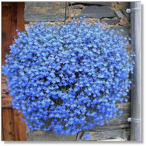 400pcs! famiglia perenne piante da giardino, fiore di lino blu fiori, piante in vaso sospeso, fiore blu semi di lino hanging
