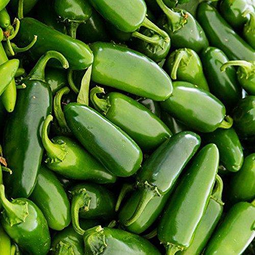 , 100 semillas jalapeño Chile Pepper rápido crecimiento de plantas hortícolas bricolaje Home Garden, pimienta más popular