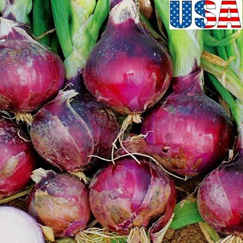 "PLAT FIRM GERMINATIONSAMEN: 200 Samen: USA-VERKÃ""UFER Southport Red Globe Zwiebel 50-400 Samen HEIRLOOM NON GMO"
