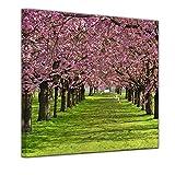 Bilderdepot24 Kunstdruck - Kirschblüten - Bild auf Leinwand - 60 x 60 cm - Leinwandbilder - Bilder als Leinwanddruck - Wandbild Pflanzen & Blumen - Natur - Kirschbäume in Voller Blüte