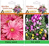 alkarty Daisy and Ice winter flower seed...