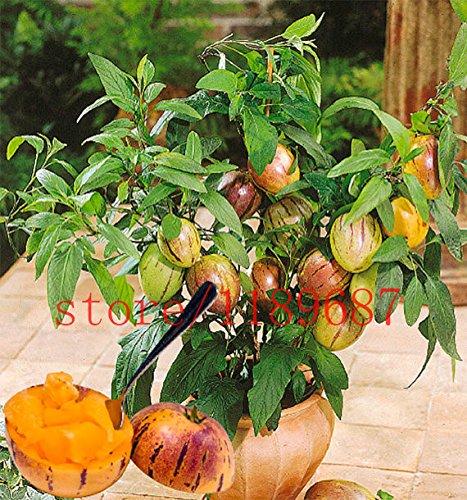 100 semillas de melón dulce de mini melón de árbol para no GMO-orgánica de frutas y semillas de hortalizas para el jardín de DIY