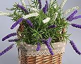 Fiori fiori di lavanda decorazione floreale Indoor simulazione simulazione Vaso di fiori Ufficio Set Living room decoration,Lancet, blu e bianco / Carrello