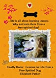 Finally Home: Lessons on Life from a Free-Spirited Dog (The Buddy Books Book 1)