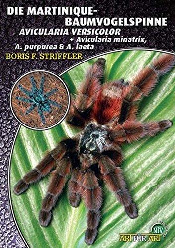Die Martinique-Baumvogelspinne: Avicularia versicolor (Art für Art)
