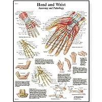 3B Scientific Human Anatomy - Hand and Wrist Anatomy/Pathology Chart, Paper Version