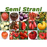 150 TOMATENSAMEN IN 15 SORTEN KOLLEKTION 2, DIE REICH AN NäHRSTOFFEN: Ochsenherz Riesen, Black Russian, Tomatillo Purple, Sweet Pea Currant, Gold Rush Currant, Weiß Kirschtomate, Schokolade Pear, Jersey Devil, San Marzano, Big Rainbow, Tigerella, Moneymaker Tomaten, Heinz, Costoluto Parma, Marmande