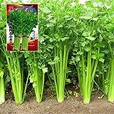 CWAIXX Farmer es vier Jahreszeiten Gartenterrasse im Frühjahr Gemüse Samen säen Gemüsesamen eingemachte Früchte Erdbeere Lauch und Koriander, Sellerie