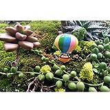 FLAMEER Miniatur Feen-Garten-Ornament für Moos Mikrolandschaft, Blumentopf - 10pcs Heißluftballon, 2.4x3.0cm
