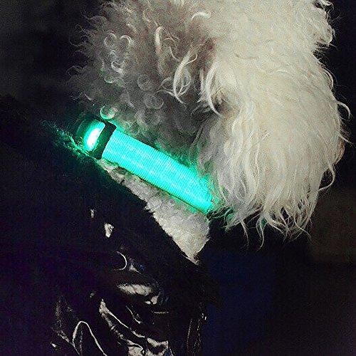 iManson LED Hundehalsband Light – Hunde Leuchthalsband Universell – 3 Modi – L Code(Blau) - 3