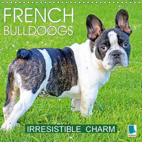 french-bulldogs-irresistible-charm-wall-calendar-2017-300-x-300-mm-square-a-breed-thats-full-of-char