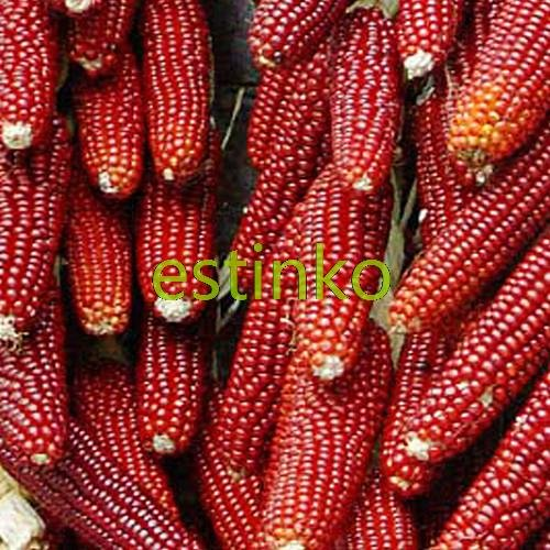 20pcs vente chaude / lot Red Waxy Corn Graines de maïs Graines de légumes Maïs doux Graines Bonsai jardin Plante en pot