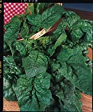 Just Seed - Spinach - Giant Winter - 300 Seeds - Economy Pack