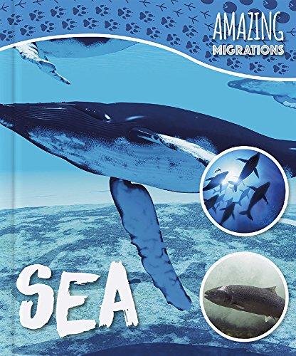 Sea (Amazing Migrations) [Idioma Inglés]
