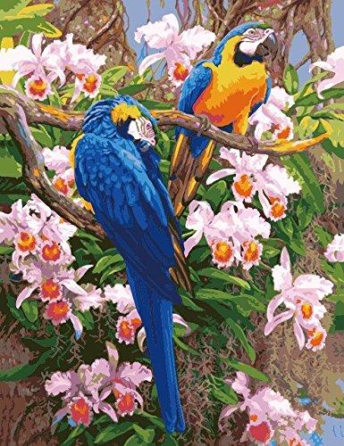 Paint by Numbers Kits, Tiere Gemälde für Erwachsene Kinder Senioren Junior, DIY Ölgemälde auf Leinwand mit Holz-Frame (Papagei) (Kinder-paint Kit)