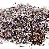 100 g BIO Keimsprossen Rotkohl Samen für die Sprossenanzucht Sprossen Microgreen Mikrogrün