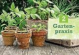 Obst-Gemse-selbst-anbauen-Schritt-fr-Schritt-zum-eigenen-Kchengarten-GU-PraxisRatgeber-Garten