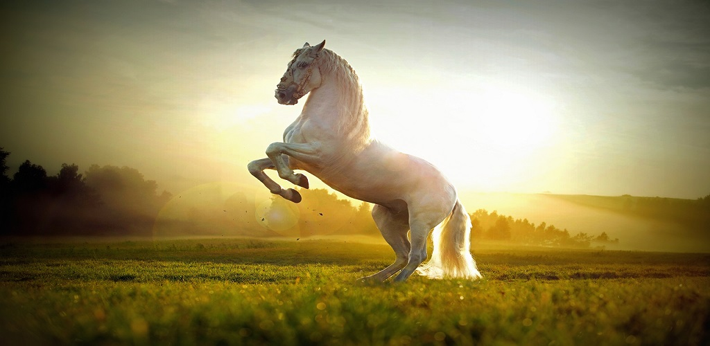 Horse hd wallpapers appstore for android - Amazon wallpaper hd ...
