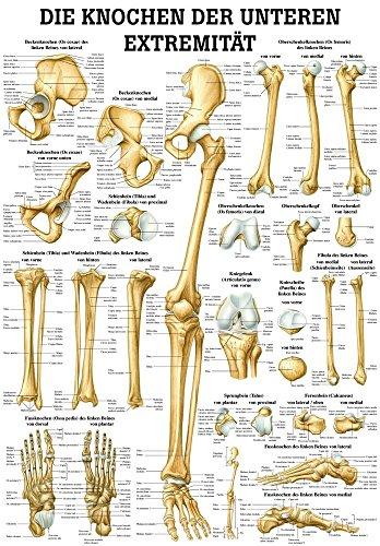 Ruediger Anatomie TA67LAM Die Knochen der Unteren Exträmität Tafel, 70 cm x 100 cm, laminiert