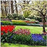Wallario Möbeldesign/Aufkleber, geeignet für Ikea Lack Tisch - Bunte Blumen und Kirsch-Baum im Park blühen im Frühling in 55 x 55 cm