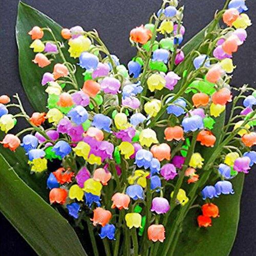 Kisshes giardino - fragranti fiori di giglio della valle semi variegati semi ornamentali rari bonsai resistenti perenni con note fragranti