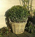 Pflanzkorb 28 cm Weide graubeige, kein Kunststoff !! Blumen Pflanzgefäß Blumentopf Korb Landhaus rund