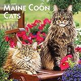 Maine Coon Cats - Maine Coon Katzen 2020 - 16-Monatskalender: Original BrownTrout-Kalender [Mehrsprachig] [Kalender] (Wall-Kalender)