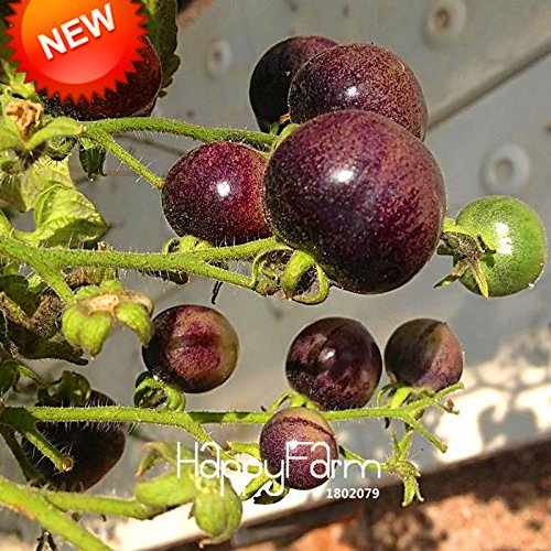 nouvelle-arrivee-red-pearl-tomate-graines-fruits-et-legumes-en-pot-mini-tomate-graines-balcon-pour-h