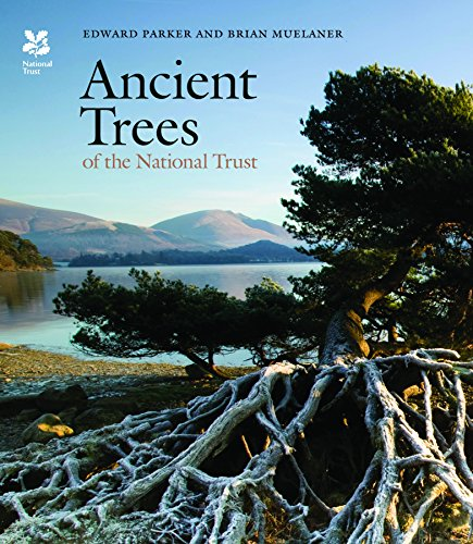 ancient-trees-of-the-national-trust