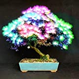 Inovey 20Stk Akazie Baum Seeds colorful Albizia julibrissin Tree Seeds Bonsai Tree Pflanzen - Bunten