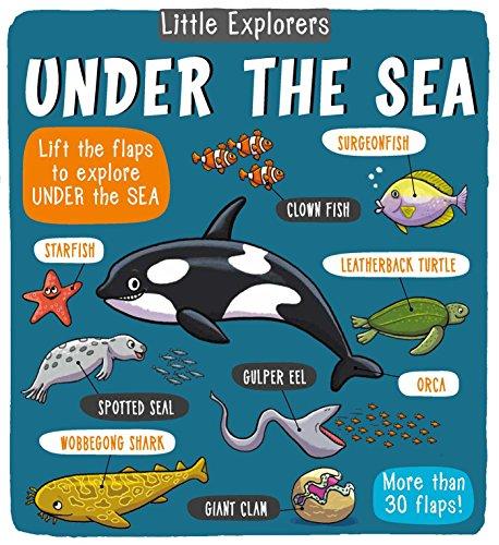 Little Explorers: Under the Sea por Little Bee Books