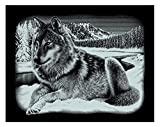 Mammut 137011 - Kratzbild Querformat-Wolf, ca. 25,2 x 20 cm, silber