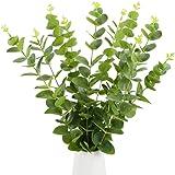 faux dollar argent s/éch/é plantes en plastique pour d/écoration faux verdure Whaline Lot de 20 feuilles d/'eucalyptus artificielles