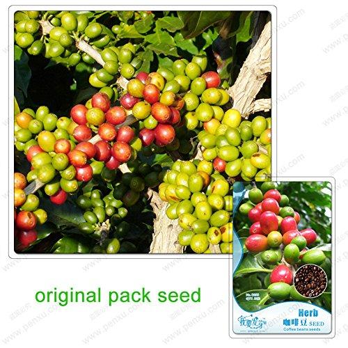 10 Samen/Pack, China Yunnan Adzukibohne Kaffeesamen, Rohkaffee Diät Rohkost Tee