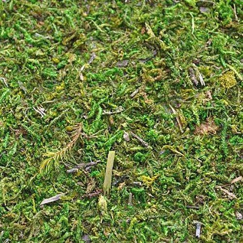 miniature-fairy-garden-preserved-moss-mat