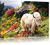 Schönes Yak Himalaya, Format: 60x40 auf Leinwand, XXL