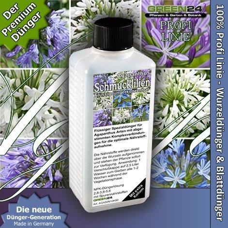 agapanthus-african-llily-lily-of-the-nile-liquid-fertilizer-hightech-npk-root-soil-foliar-fertiliser