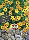 Sperli-Samen Schwarzäugige Susanne gelb-orange Variation