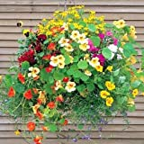 Pinkdose® Blumensamen: Beste Pflanzen für Hängekörbe Creepers und Kletterpflanzen Pflanzen - Terrasse Garten Samen (6 Pakete) Garten Pflanzensamen von