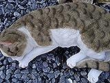 Dekofigur Gartenfigur Deko Katze wetterfest frostfest Garten Figur lebensecht XL