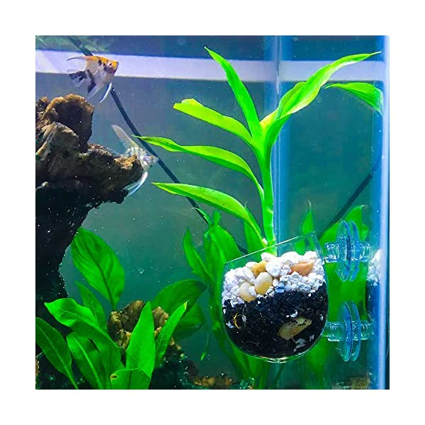 SENZEAL 2x Plant Glass Cup Pot with 4x Suction Cups for Fish Tank Aquarium Aquascaping