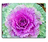 Luxlady Natural rubber Gaming Mousepads Colorful Cavolfiore Image ID 26462345