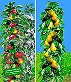 BALDUR-Garten Säulen-Obst Kollektion Birnen & Apfel 2 Pflanzen Birnbaum
