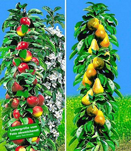 Birnbaum Blume (BALDUR-Garten Säulen-Obst Kollektion Birnen & Apfel 2 Pflanzen Birnbaum + Apfelbaum Säulenobst)
