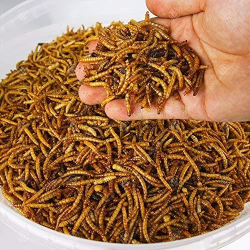 GardenersDream Getrocknete Mehlwürmer - Premium Wildvögelfutter, große Würmer - Samen Die Für Vögel