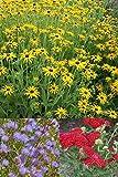 Foerster-Stauden-Set 'Farbkreis' für 1 m² Stauden & Gräser Rot-Gelb-Blau blühend für einen sonnigen Standort mit trockenem Boden 9 Pflanzen